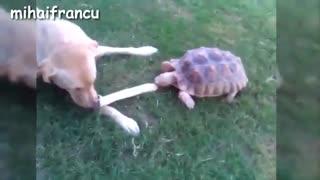 کلیپی جالب از سواری دادن لاکپشت به سگ و طوطی