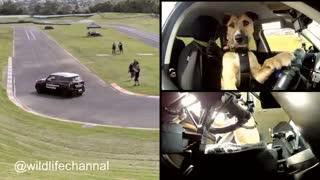 پورتر  سگ باهوشی هست که بعد از یک دوره یکماهه آموزشی توسط مربیهاش در نیوزلند تونست رانندگی کنه و لقب اولین سگ راننده رو بهش دادن