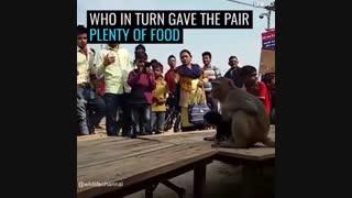 این میمون تصمیم گرفت یک توله سگ بی پناه که در خیابان زندگی میکرد را بزرگ کند و حتی از اون در مقابل حمله سگهای دیگه حمایت کند
