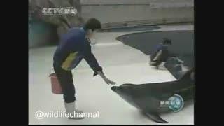 از قد بلند ترین مرد جهان boa xishun می خواهندتا  باعث نجات دلفین پلاستیک خورده  شودچون بلندترین دست را دارد