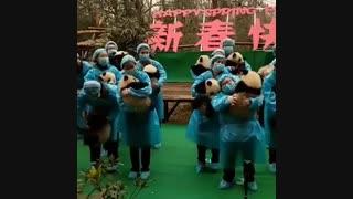 تلاش دولت چین برای حفظ پاندا ها