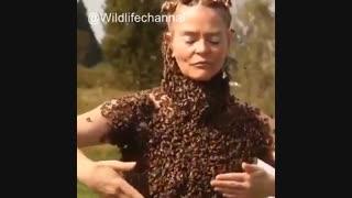 کلیپی جذاب از زنی که بدن برهنه خود را با هزاران زنبور می پوشاند