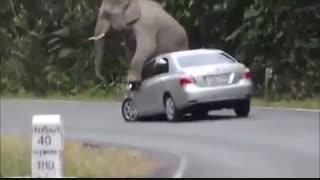 حمله مخوف و عجیب فیل عصبانی به ماشین و له کردن آن
