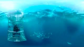 فیلم 360 درجه جزیره آرواره