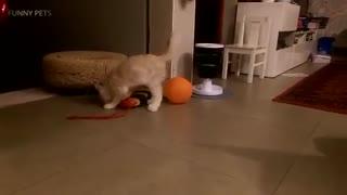 ماجرای  گربه و بادبادک (خنده دار)