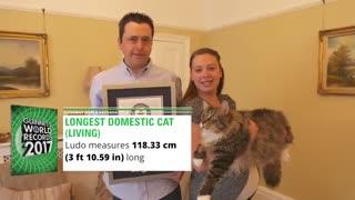 رکورد گینس بلندترین گربه جهان !