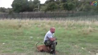 برترین سگ های آموزش دیده!!!