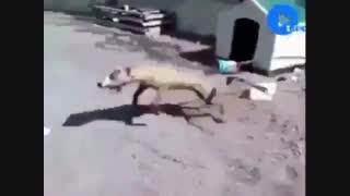 مجموعه صحنه هائی  از عواقب حیوان آزاری