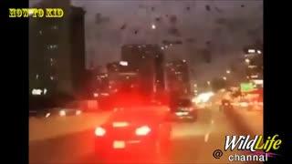 ویدیوی ترسناک از حمله پرنده گان سیاه به ایالات تگزاس امریکا