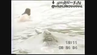 حمله کروکودیل  به انسان در رودخانه