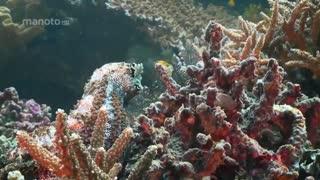 سواحل رویایی با دوبله فارسی - سواحل استرالیا