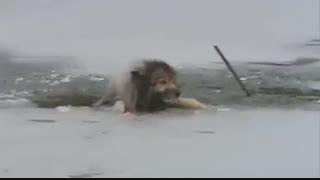 نجات یک سگ از دریاچه یخ زده