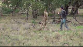 یک محیطبان که در باغ وحش کار میکند بعد از اینکه متوجه شد یک کانگورو به سگش حمله کرده به نجات سگش شتافت
