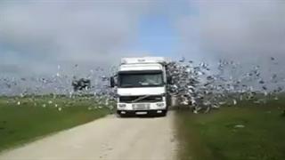 رها کردن هزاران پرنده
