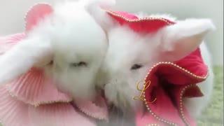 موزیک ویدیو عشق بهاری (Spring Love) / جیووانی مارادی