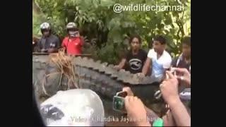 اهالی یک روستا در سریلانکا،  تمساح بزرگ ۵ متری را پس از ناپدید شدن سه نفر از مردان روستا، شکار کردند