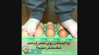 آیا ایستادن روی تخم مرغ باعث شکستنش میشه