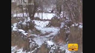 نواختن تار ترکمنی در روستای یکه صعود بخش جرگلان در خراسان شمالی