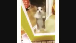 ته خنده(رقص گربه با آهنگ)