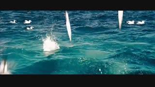 تصاویر بی نظیری از شکار ماهی توسط پرندگان دریایی