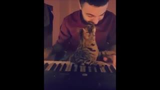 گربه ای که عاشق موسیقی ست