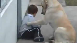 رابطه زیبا یک سگ با کودکی که از بیماری سندرم داون رنج میبره !