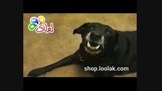 مصاحبه با حیوانات درباره پت شاپ اینترنتی لولاک
