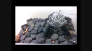 ربات عنکبوتی پرینت سه بعدی شده