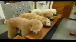 رفتار های حیوانات خانگی ....شدیدا جالب