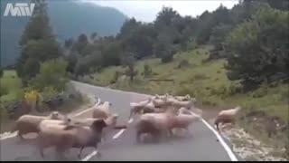 کودتای گوسفندان علیه چوپان خود ...فقط اخرین ضربه-ــــــــ-