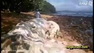 پیدایش موجود عجیب در سواحل فیپیلین...!