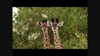 پارک ملی سرنگیتی، آفریقا