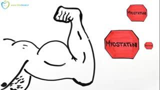 حجیم کردن عضلات (فارسی در سیب اول)