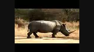 حیات وحش زندگی در جنگ و جدال برای وحوش