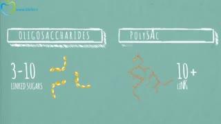 تاثیر کربوهیدارت ها بر سلامتی - به زبان فارسی در سیب تل