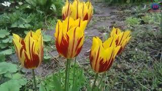زیبا ترین گل های جهان