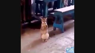 گربه ای که دست میزنه...توضیحات مهم!!