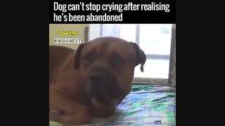 گریه سگ وقتی ک فهمید صاحبش ترکش کرده T~T