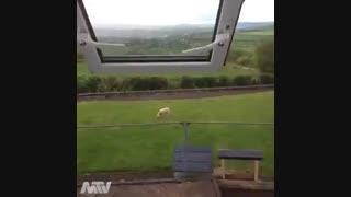 این دوتا زبون همو میفهمن:///..بخدا هزاران بار جلو گاو  گوسفند رفتم صداشونو در اوردم پوکر میشدن نگام میکردن:(