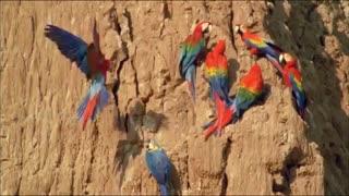 مستند زیبای آمازون اسرار آمیز (دوبله)