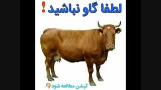 لطفا گاو نباشید!!!