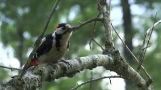 فیلم مستند دنیای زیبایی پرندگان  (قربان خدا شوم با این زیبایی عظمت خلقتش)
