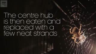 تایم لپسی زیبا از هنر معماری یک عنکبوت
