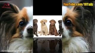 10 نژاد باهوش سگ