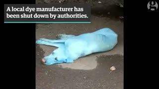 سگهای آبیرنگ در هند