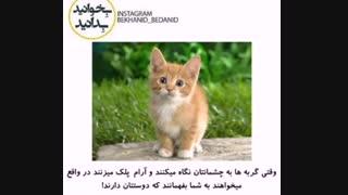 چه زمانی بفهمیم گربه ها مارا دوست دارند ؟! :|||..::///دانستنی....