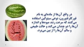 از خوردن این نوع هندوانه اجتناب کنید