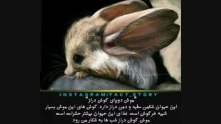 موش دو پای گوش خرگوشی ^_^ ::////دانستنی....