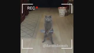 سریال گربه های آرون (پست گربه ها در Youtube) کلیپ رحمان