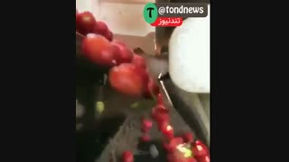 دستگاه گوجه جداکن! گوجه های نرسیده رو با سرعت باورنکردنی و بادقت بالا جدا میکنه